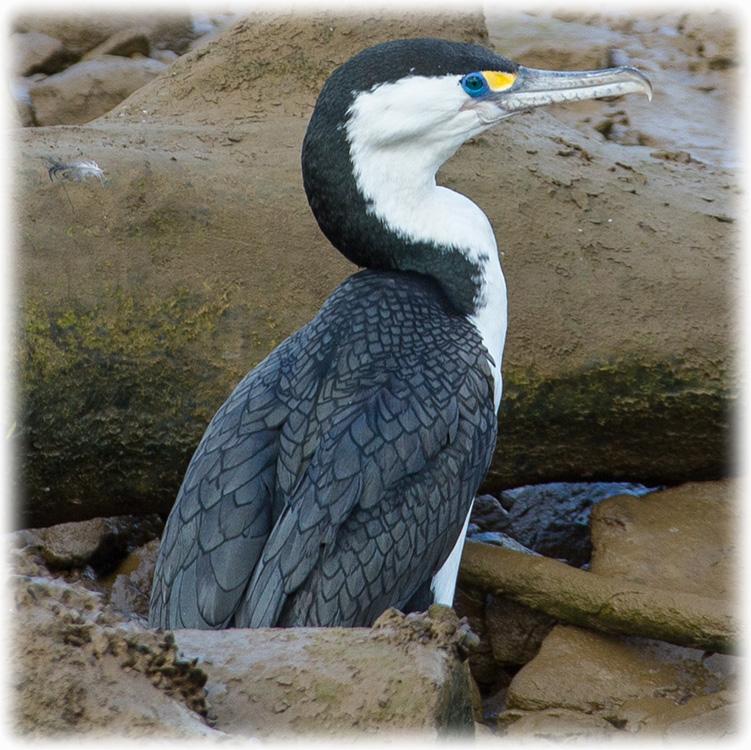 bird watching on new zealand
